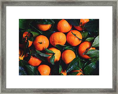 Tropical Poncan Oranges Framed Print