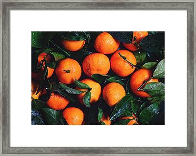 Tropical Poncan Oranges Framed Print by Fbmovercrafts
