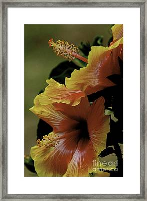 Framed Print featuring the photograph Tropical Punch by Lori Mellen-Pagliaro