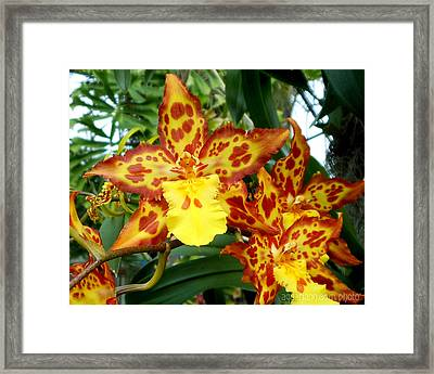 Tropical Red And Yellow Orchids Framed Print