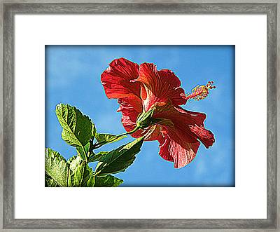 Tropical Red Hibiscus  Framed Print