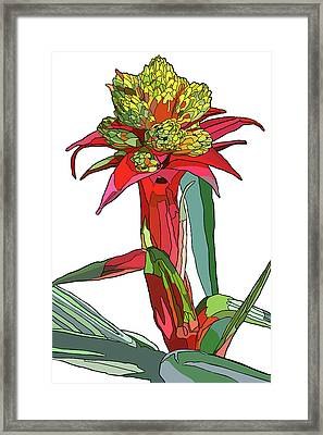 Tropical Reds Framed Print