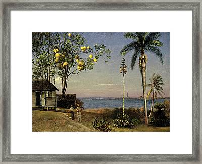 Tropical Scene Framed Print by Albert Bierstadt
