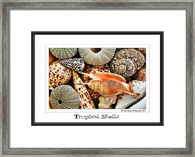 Tropical Shells... Greeting Card Framed Print