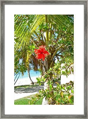 Tropical Spring Flower Framed Print