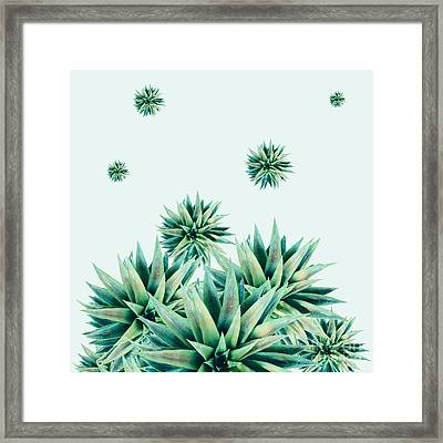 Tropical Stars  Framed Print by Mark Ashkenazi