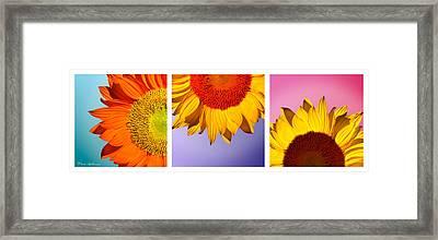 Tropical  Sunflowers Framed Print by Mark Ashkenazi