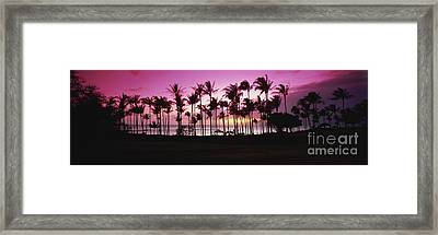 Tropical Sunset With Magenta Sky Framed Print