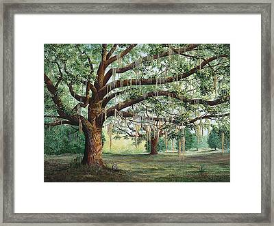 Tropical Trail Trio Framed Print