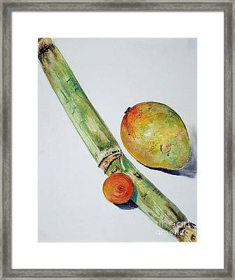 Tropical Trio Framed Print