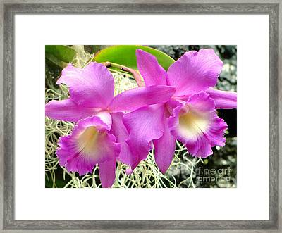 Tropical Twins Framed Print by Sue Melvin