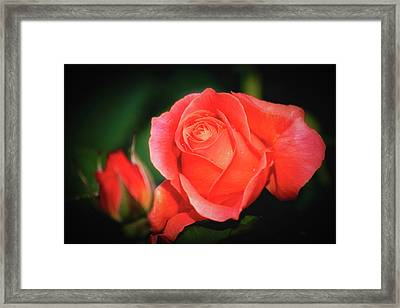 Tropicana Rose Framed Print