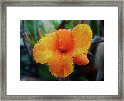 Tropicanna, Orange Canna Lily Framed Print by Geraldine Cote