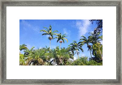 Troplical Garden At Fairchild Fl Framed Print by Edier C