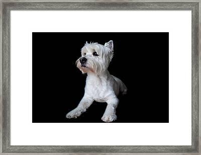 Trot Posing Framed Print