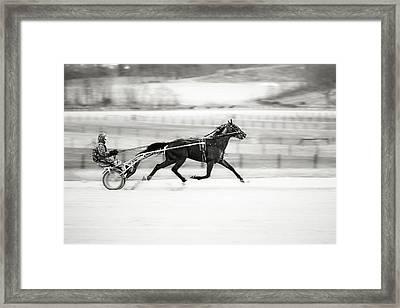 Trotter's Life Framed Print by Eduard Moldoveanu