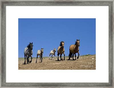 Trotting Mustangs Framed Print by Jean-Louis Klein & Marie-Luce Hubert