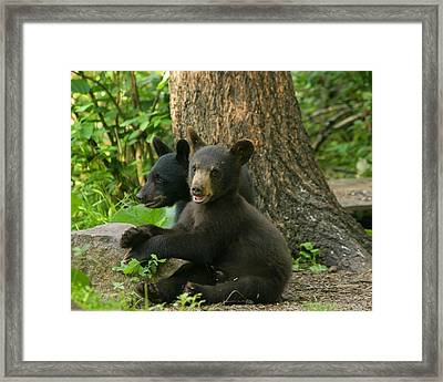 Trouble And More Trouble Framed Print