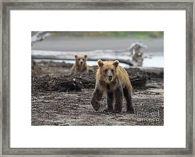 Troublemaker Framed Print
