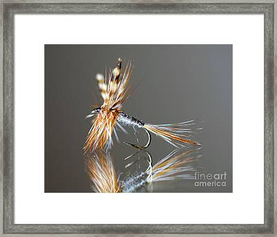Trout Fly 2 Framed Print by Glenn Gordon