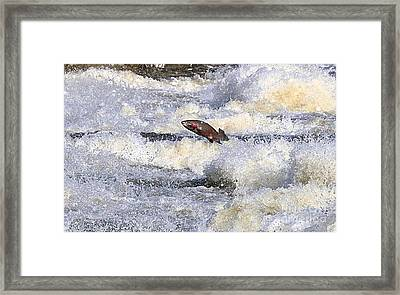 Framed Print featuring the digital art Trout by Robert Pearson