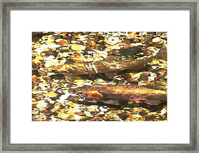 Trout Stream Framed Print by Greg Hammond