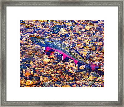 Trout Stream Framed Print