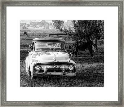 Truck And Cows Living Together Bw Framed Print