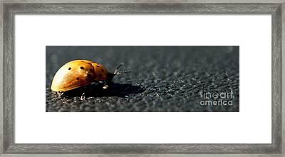 Trudge Framed Print by DiDi Higginbotham