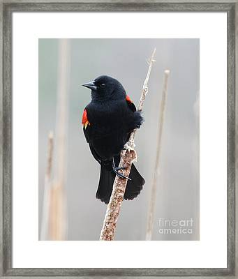True Beauty Framed Print by Anita Oakley