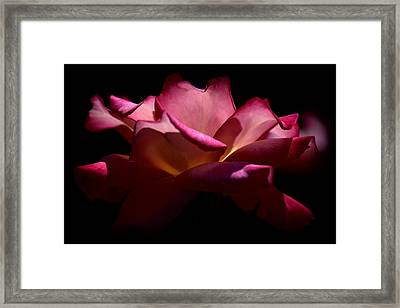 Framed Print featuring the photograph True Beauty by Lori Seaman