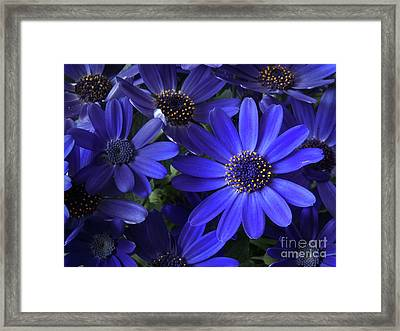 True Blue Baby Framed Print by Dorothy Lee