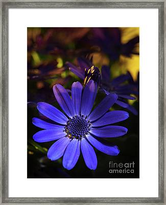 True Blue In The Late Afternoon Sunlight 3 Framed Print