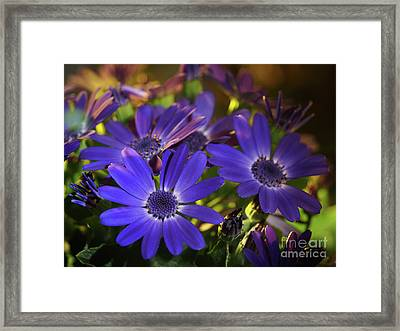 True Blue In The Late Afternoon Sunlight Framed Print by Dorothy Lee