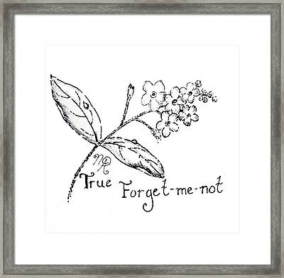 True Forget-me-not Framed Print