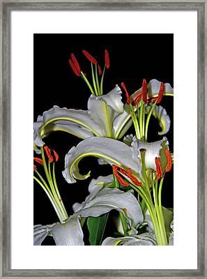 True Lilies Framed Print