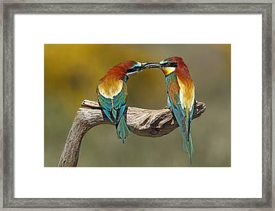 True Love Framed Print by Nicol?s Merino
