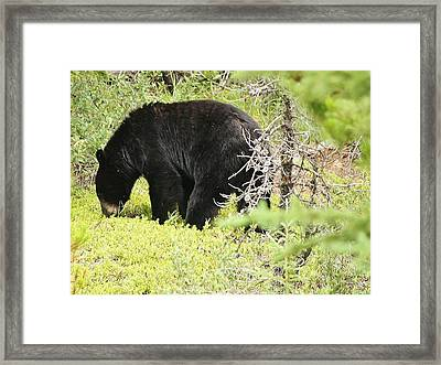 True Nature Framed Print