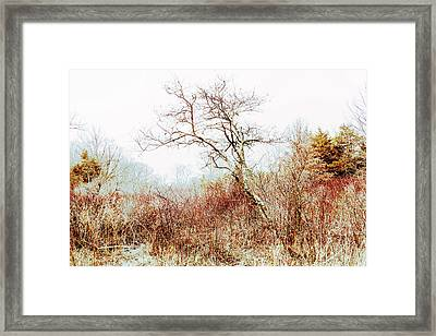 Trumbauersville Walking Path Framed Print by Mother Nature