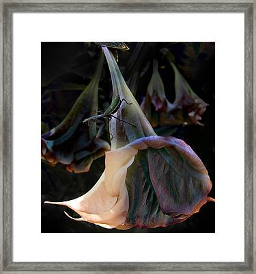 Trumpet Flower Framed Print