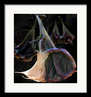 Praying Mantis Framed Prints