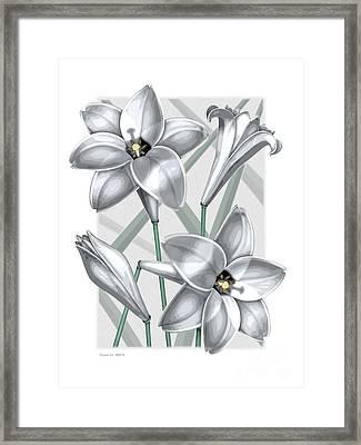 Trumpet Lilies Framed Print
