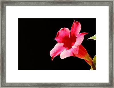 Framed Print featuring the photograph Trumpet by Richard Patmore