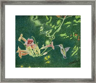Trumpet Vine Rubby Framed Print