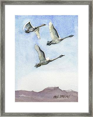 Trumpeter Swan Study Framed Print
