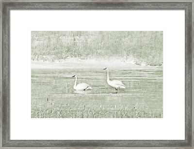 Framed Print featuring the photograph Trumpeter Swan's Winter Rest Green by Jennie Marie Schell