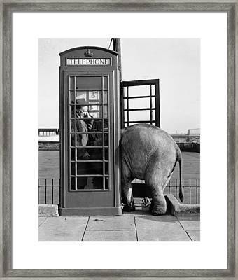 Trunk Call Framed Print