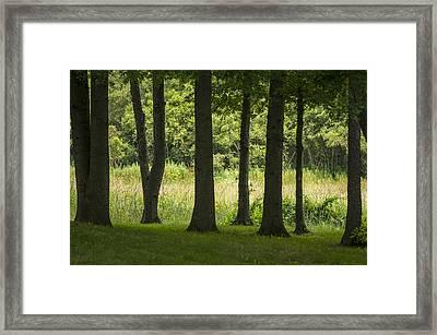 Trunks In A Row Framed Print