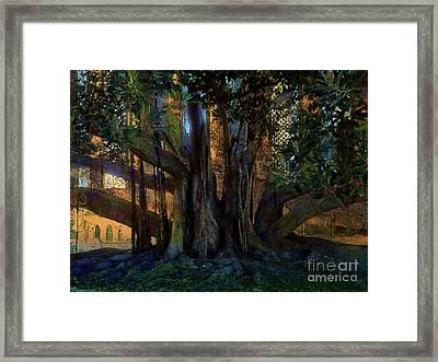 Trunks Framed Print by Robert Ball