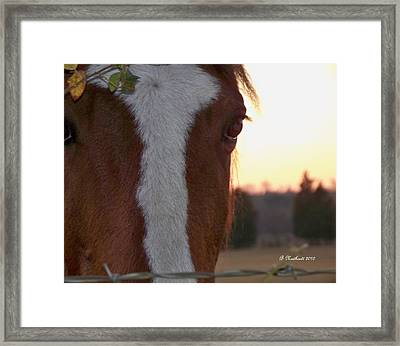 Framed Print featuring the photograph Trusting by Betty Northcutt
